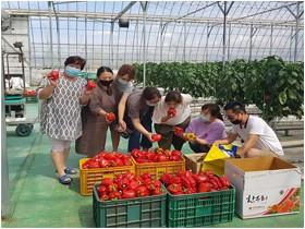 철원군농업기술센터 시험재배한 파프리카, 복지시설에 기부